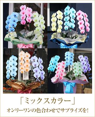 3色胡蝶蘭サプライズエレガンス