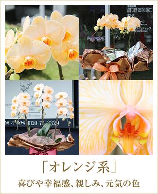 オレンジ胡蝶蘭オレンジエレガンス