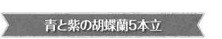 青い胡蝶蘭【ブルーエレガンス】入学・移転・就任にオススメ