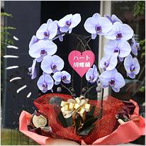 紫の胡蝶蘭パープルエレガンス[ハート型大輪]