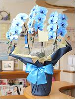 27輪青い胡蝶蘭ブルーエレガンス[3本立] 27000円(税込)