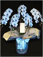 45輪青い胡蝶蘭ブルーエレガンス[5本立] 43000円(税込) [レビュー割引有]
