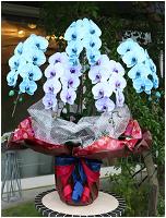 青と紫の胡蝶蘭極上エレガンス[5本立] 43000円(税込) [レビュー割引有]