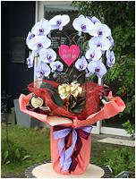 紫の胡蝶蘭パープルエレガンス[ハート型2本立] 30000円(税込) [レビュー割引後]