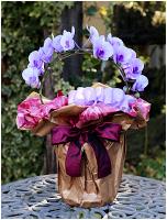 紫の胡蝶蘭パープルエレガンス[リング型ミディ] 6000円(税込) [レビュー割引後]