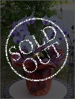 紫の胡蝶蘭パープルエレガンス[ハート型ミディ] 13000円(税込) [レビュー割引後]