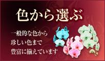 胡蝶蘭の色から選ぶ