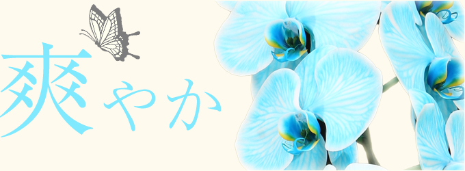 当店おすすめ胡蝶蘭~新鮮・安心・高品質をお求めでしたらフラワーショップ花夢にお任せください