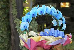 リング型青いミディ胡蝶蘭