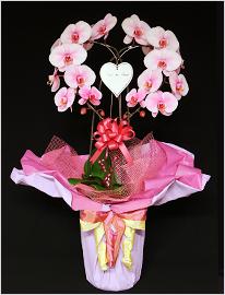 ピンクの胡蝶蘭パープルエレガンスハート型[2本立]