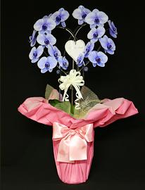 紫の胡蝶蘭パープルエレガンスハート型[2本立]