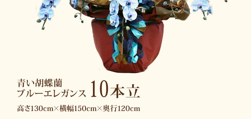 青い胡蝶蘭ブルーエレガンス10本立