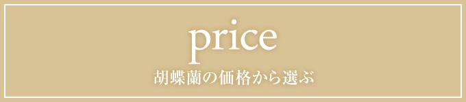 胡蝶蘭の価格で選ぶ