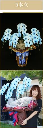 5本立胡蝶蘭
