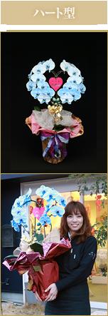 ハート型胡蝶蘭